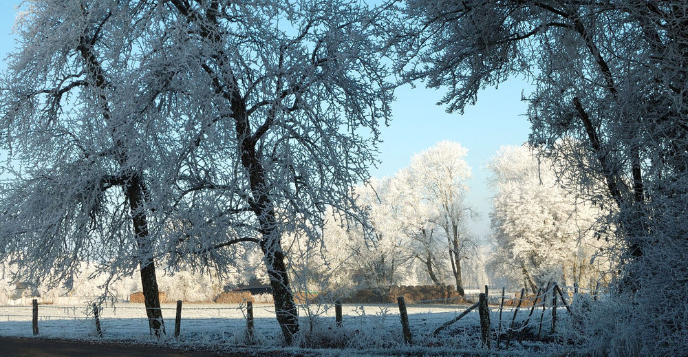 Arbre Beauty In Nature Branch Campagne Campagnefrançaise Champ Day Givre Igersyonne Nature Outdoors Paysage Sky Tranquility Tree Tree Winter Ygersyonn