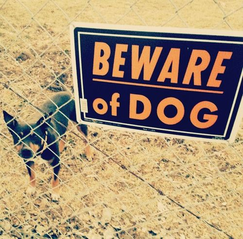 Beware Of Dog Dog Guarddog Bad DogDisclaimer: He is really a good and sweet boy. :)