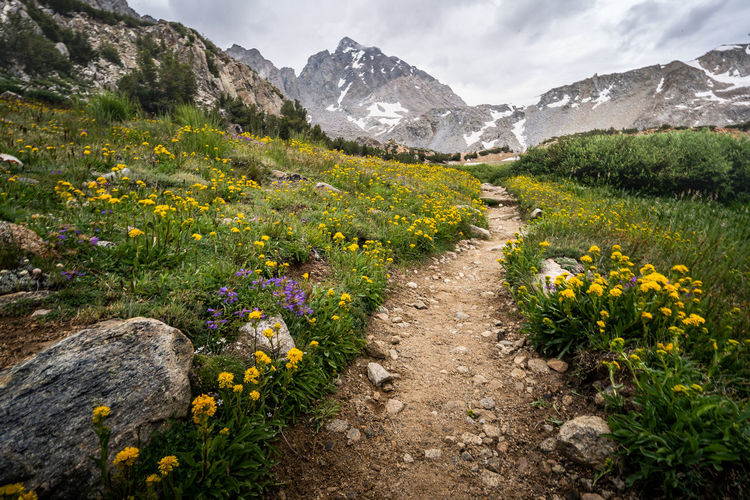 Stark juxtaposition | One of the sights that pleasantly surprised me on my way was the abundant amount of wildflowers along the trail, which came in all different colors, shapes and sizes. When I arrived at this particular section of Bishop Pass Trail, Bishop Pass, one of the most popular passes in the Eastern Sierra, came into view for the first time. And Mt. Agassiz to its right immediately steered my gaze away from the pass. The peak looked quite taller than I originally imagine. And even later when I reached the pass, I was quite stunned by how massive the peak looked in its overwhelming presence. The stark juxtaposition of the colorful wildflowers in the foreground against the above treeline mountain backdrop pleased my eye. And believe me. The barren upclimb looked quite inviting as the trail that had led me to this point. Bishop Pass Trail, CA Bishop Pass Bishop Pass Trail Mt. Agassiz A Above Tree Line Beauty In Nature Eastern Sierra Flower Flowerbed Flowering Plant Footpath Freshness Landscape Mountain Mountain Peak Mountain Range Nature No People Outdoors Overcast Plant Scenics - Nature Sierra Nevada Sky Tranquil Scene