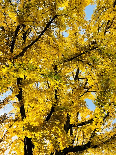 Tree Yellow Branch Autumn Beauty In Nature Growth Nature Leaf Flower Low Angle View Fragility No People Blossom Outdoors Backgrounds Freshness Change Springtime Scenics Full Frame Yellow Color