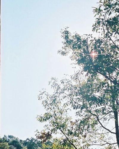 Portra400 Olympus倶楽部 Olympuspeneed Myolympusstyle Film Filmphotography Filmcamera オリンパス倶楽部 オリンパスペンEED フィルム写真普及委員会 フィルム写真 フィルムに恋してる Kodak フィルム ふぃるむカメラ フィルム部 ハーフサイズカメラ 写真好きな人と繋がりたい ファインダー越しの私の世界 カメラ好きな人と繋がりたい カメラ日和 お写んぽ コダック ポートラ400 Halfsizecamera 太陽 sun オリンパスPENEED