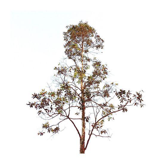 Trees Tree Naturelovers Plants Monday Blues