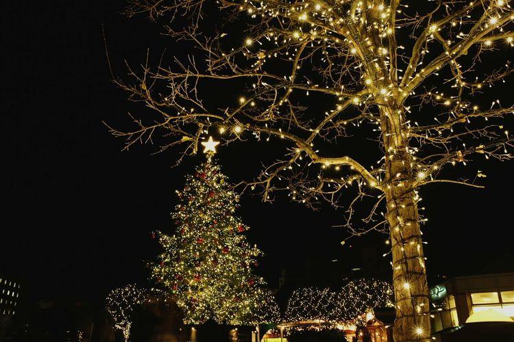 'Tis the season' Christmas Tree Christmastime Christmas Lights Nightphotography Seasonsgreetings