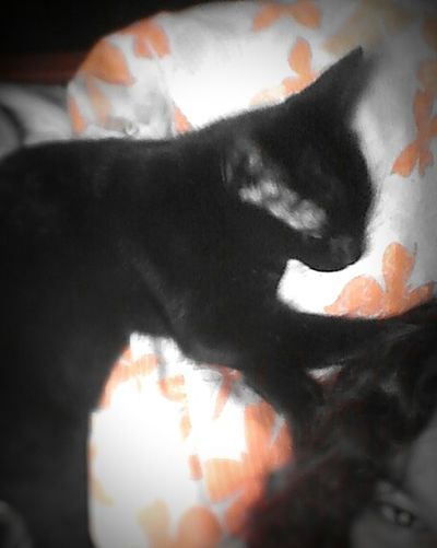 Myblackcat Sleeping Relaxing Taking Photos Blackandwhite Orange Magic Color Playing With Effects Aizen My Cat