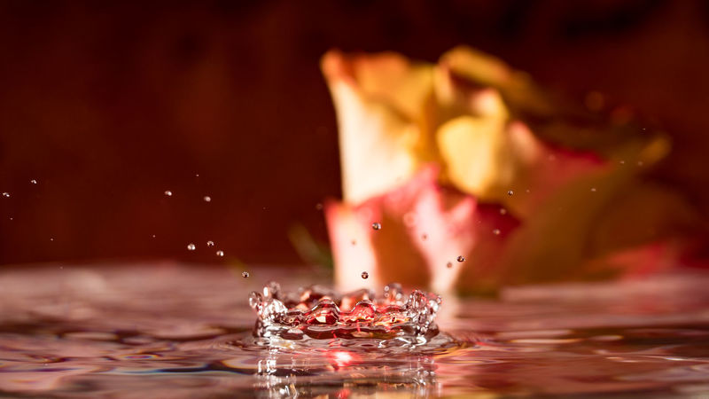 Close-up Drop Drops Of Water Drops_perfection Drops💧 Flower Indoors  Kitsch Oder Kunst Kitschalarm! Motion No People Roses Splashing Water