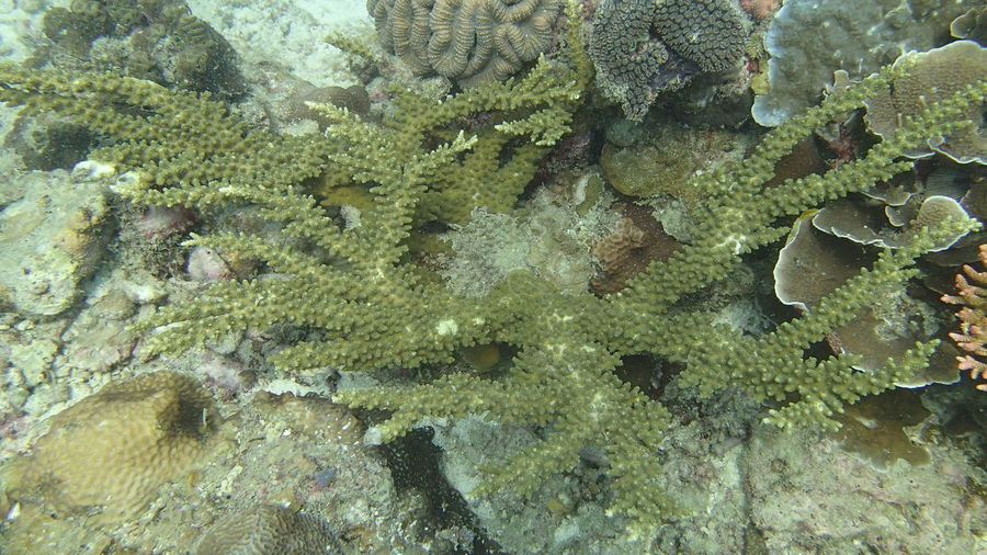 Full frame shot of fish in sea