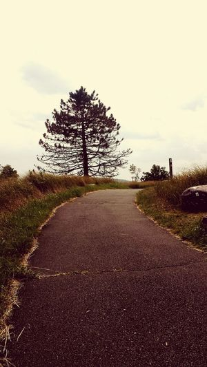 Treeoflife Chosen Paths Bearmountain