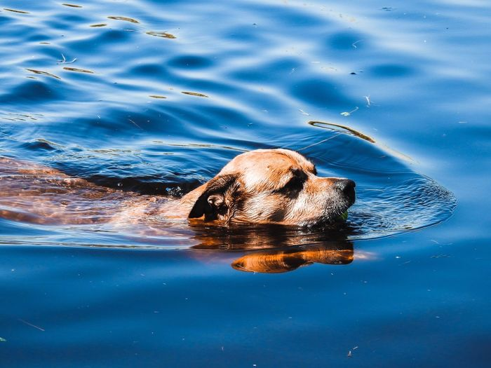 High angle view of dog swimming in lake