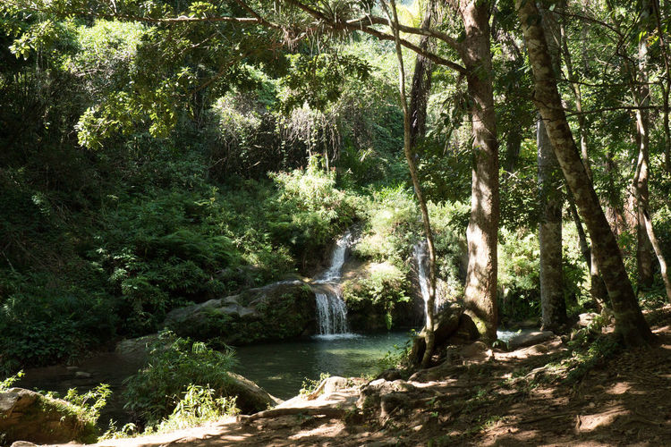 Alturas de Banao: Waterfall Alturas De Banao Beauty In Nature Cuba Cuba Collection Day Forest Growth Landscape National Park Nature Nature No People Outdoors Scenics Tranquil Scene Tranquility Tree Water Waterfall