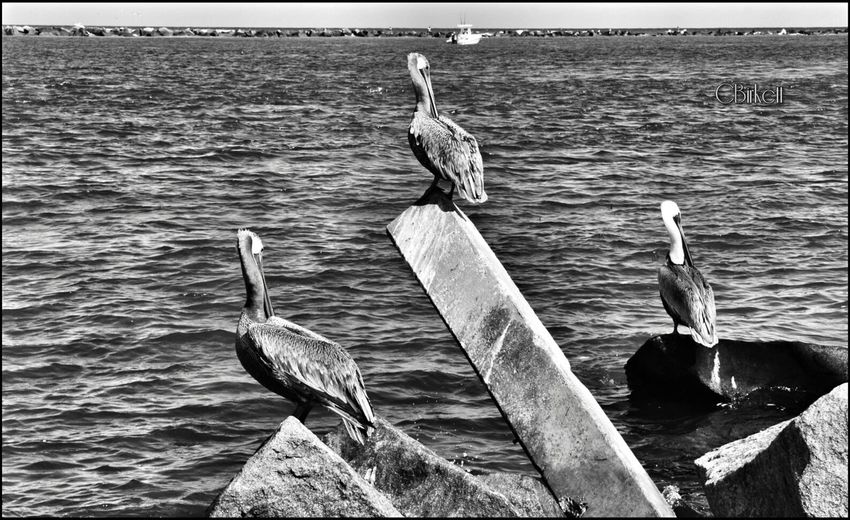 Streamzoofamily Eye Em Best Shots -Black +White Photographing Birds Eye Em Nature Lover Popular Photos Beachphotography Black And White Photography