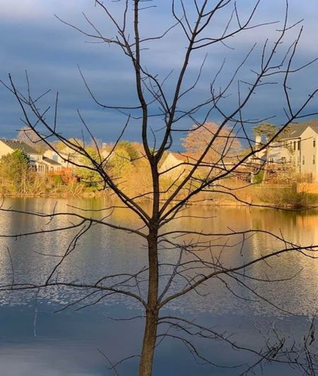 Bare tree by lake and buildings against sky