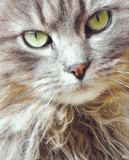 Tout se sait par le regard ? Cat Love