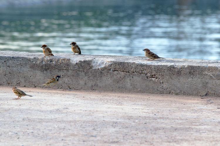 Birds Perching On Pier At Beach
