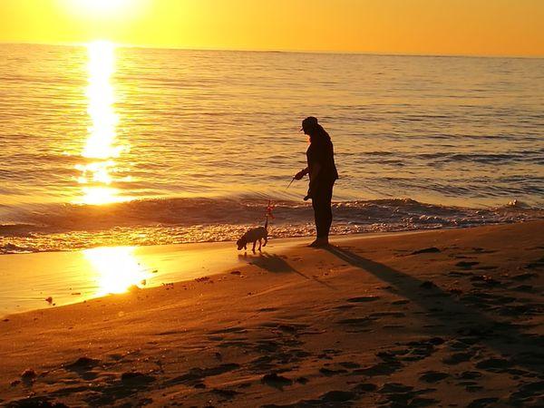 Afternoon walk, beach, sunset, dog