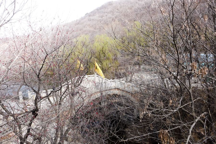 TaoistTemple Arch Bridge China Spring Flower Such As Snow Watting Looking For You  Approach The Bridge To Your Heart