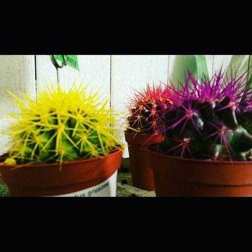 кактусы гыгыгы🌵