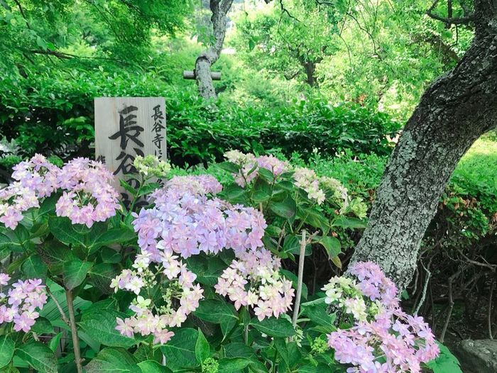 View of flowering plants in forest