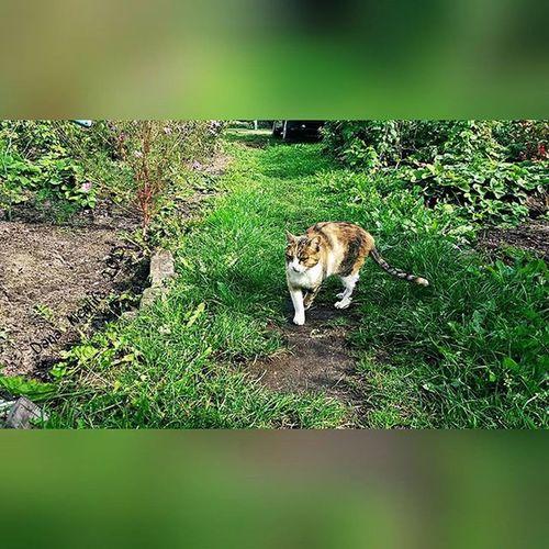 Cat🐈 Cat Love_cat Green Green Grass Nature Love Nature Beautiful кошка кот Люблю_кошек зелень  зелёная_трава Природа люблю_природу красиво