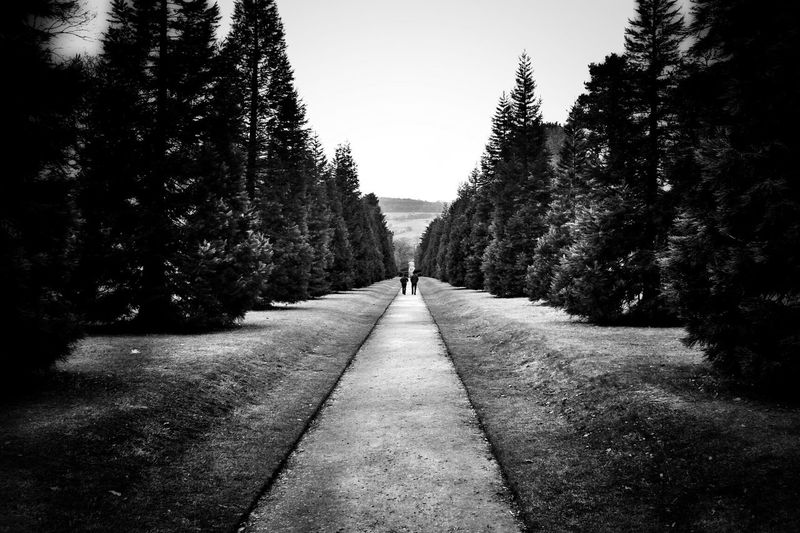Blackandwhite Trees Walk The Line Bw_collection