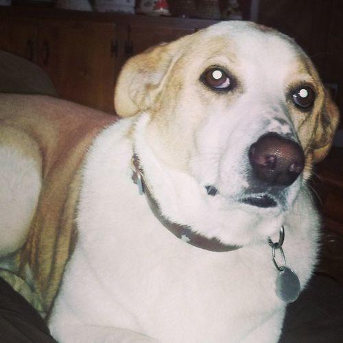 O'Shea MyBoy Seriouslynotgivingashit Pup