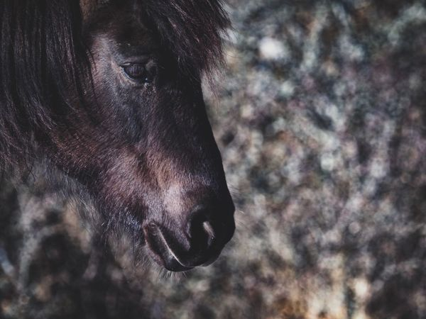 Horse Horse Photography  Horses Horse One Animal Animal Themes Animals In The Wild Animal Wildlife No People Outdoors Mammal