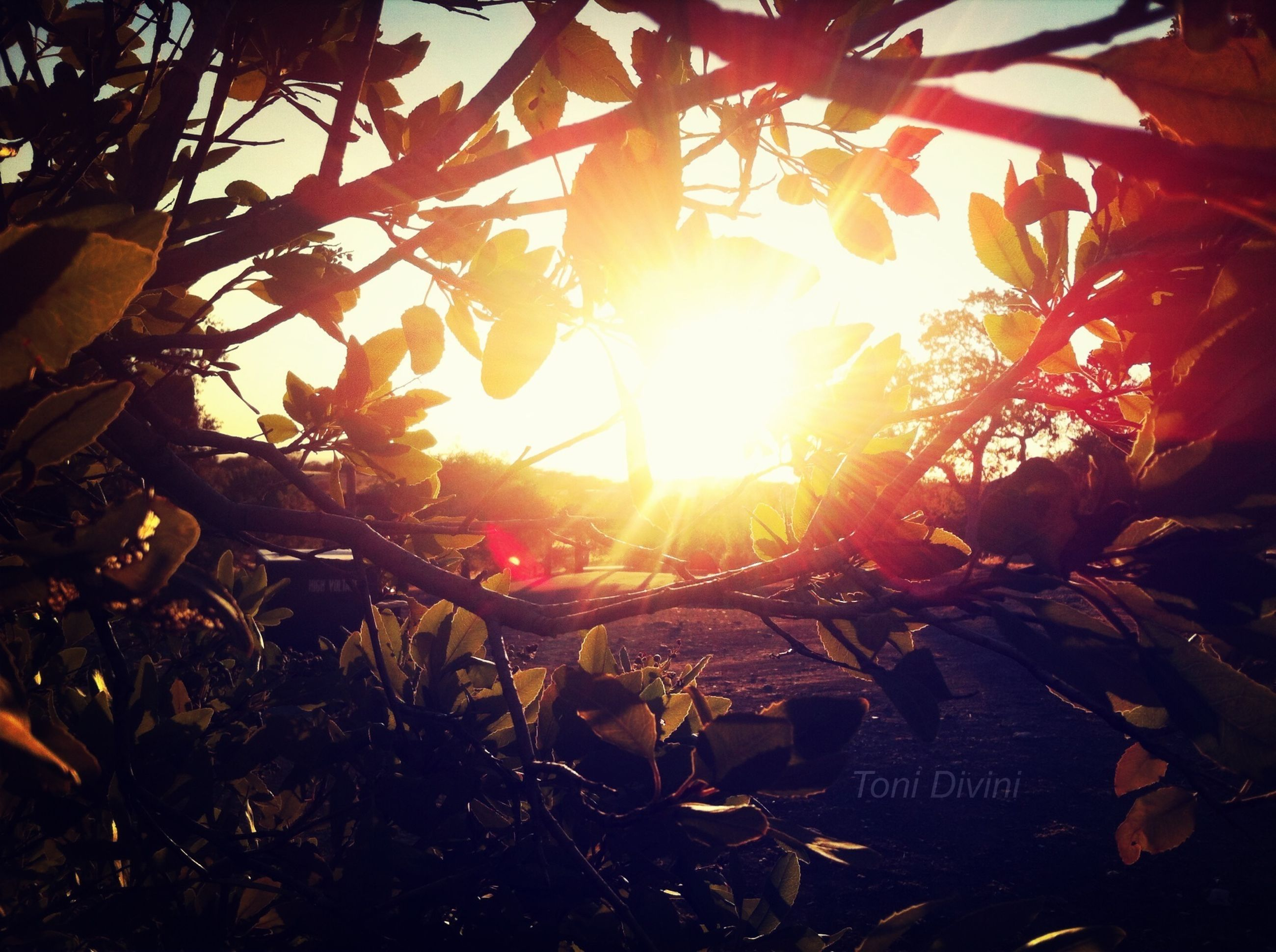 sun, sunset, sunlight, sunbeam, orange color, leaf, nature, tree, lens flare, sky, tranquility, growth, no people, beauty in nature, outdoors, branch, scenics, field, plant, tranquil scene