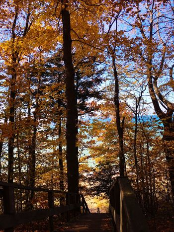 Looking Down Through The Trees Stairs Staircase Water Lake Lake Michigan No People Autumn Colors Autumn Beauty In Nature Nature Scenics Fall Day Tranquility Fall Beauty Tranquil Scene Autumn 2016