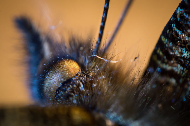 Animal Themes Animal Wildlife Animals In The Wild Close-up Day Insect Jumping Spider Nature No People One Animal Outdoors Selective Focus Spider