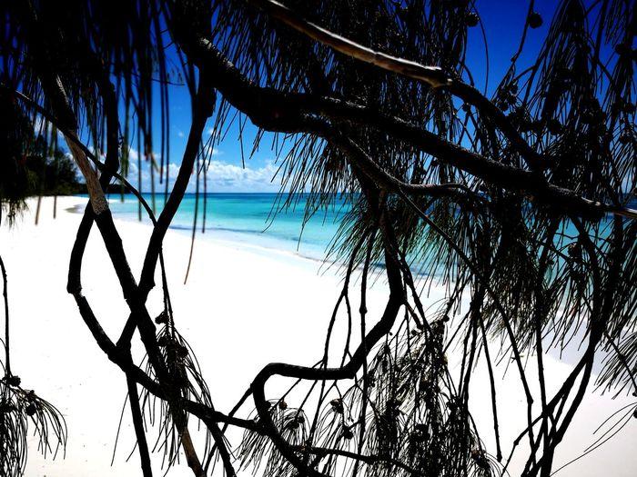 Pacific Ocean Paradise Beach Paradise Blue Lagoon New Caledonia Ile Des Pins Island Tree Water Sea Branch Beach Blue Tree Trunk Beauty Sky