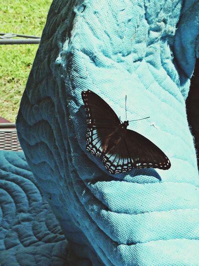 pretty black & blue butterfly