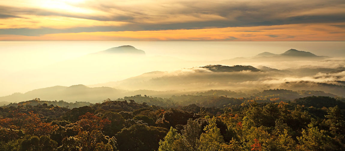 Beautiful golden light of Doi Inthanon National Park in winter season and mist the highest mountain in Thailand. Chiangmai Province, Northern of Thailand Scenics - Nature Beauty In Nature Tranquil Scene Sky Sunset Tranquility Cloud - Sky Mountain Idyllic Environment Non-urban Scene No People Landscape Orange Color Nature Majestic Fog Mountain Range Plant Outdoors Hazy  Mountain Peak Chiangmai Golden Doi Inthanon Panorama Autumn Mist Misty Morning Outdoor Yellow ASIA Asian