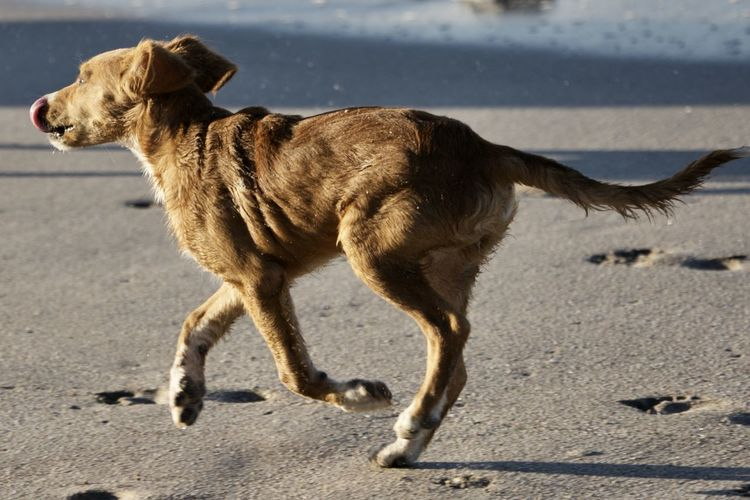Mammal One Animal Animal Themes Animal Domestic Animals Domestic Pets Canine Dog Vertebrate No People Full Length Side View Land Day Sunlight Motion Nature Road City