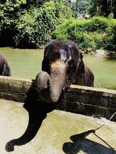 Babyelephant Babyelephant😍🐘 Babyelephantbath Elephant Bath Thailand Thailand_allshots EyeEm Thailand Thailandtravel A Day In Thailand Hotel Holiday Trekking Elephant Trekking