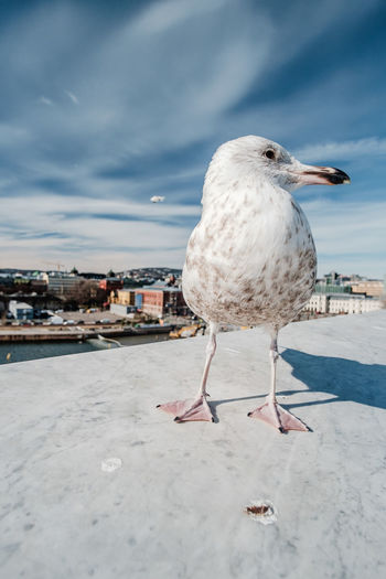 Bird Animal Themes Animal Vertebrate One Animal Animals In The Wild Sky Animal Wildlife Seagull Nature Perching Cloud - Sky Day Architecture City Built Structure Building Exterior No People Outdoors Focus On Foreground