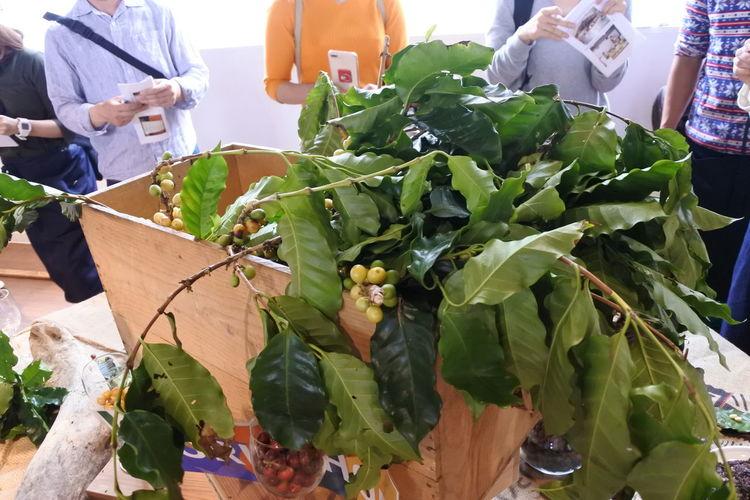 Coffee Japan Japan Photography Nature Nikon Plant Plants Tokyo Workshop Coffee Cherry Coffee Tree Food And Drink Hipster Nikonphotography Organic