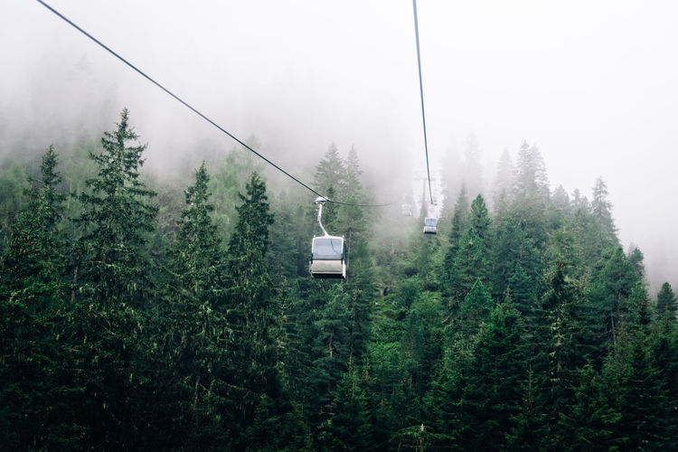 Overhead cable cars in forest during foggy weather