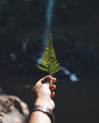 ¿Cuál es nuestro propósito en la tierra? Lakeview Lake Tree Outdoor Photography EyeEm Best Shots EyeEm Nature Lover OpenEdit Landscape The Week on EyeEm Hand Human Hand Leaf Plant Part Human Body Part Plant Holding Nature Body Part Green Color Unrecognizable Person Human Finger