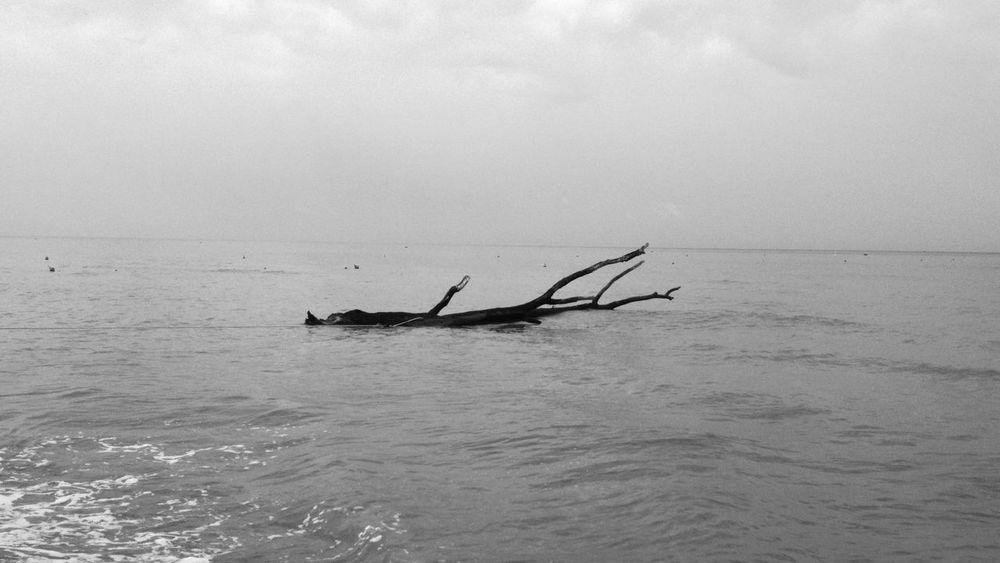 Tree in water Ocean Blackandwhite Tree EyeEmSwiss