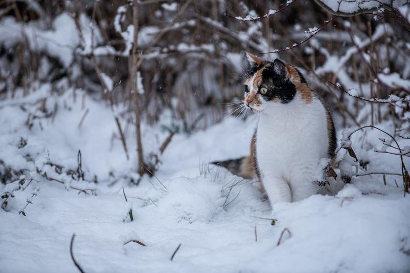 Cat in snow on land