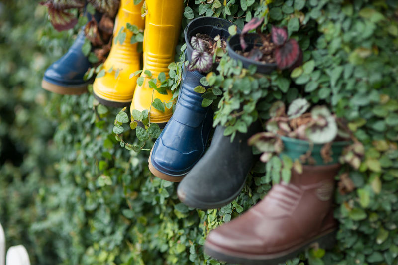 High angle view of shoes hanging on plant