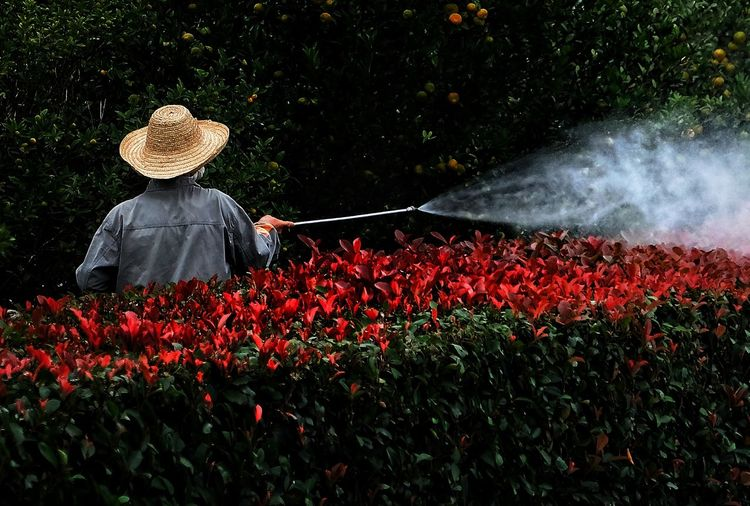 Rear view of man watering plants in park