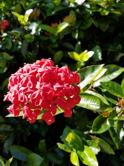 Freshness Close-up Flower Head Fragility Petal Outdoors Leaf Day No People Beauty In Nature Nature Flower Red Plant Growth Tranquility