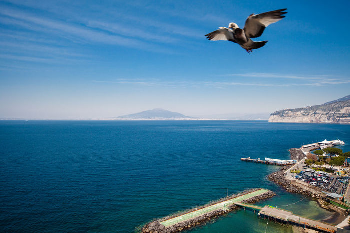 View of Sorrento coastline at sunset with Vesuvio at the horizon and a flying bird Bay Of Naples Beauty In Nature Bird Cristal Clear Day Flying Flying High Mountain Nature Nautical Vessel No People Outdoors Peninsula Scenics Sea Sky Sorrento Transportation Travel Destinations Vesuvio Vesuvius  Water