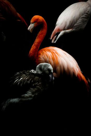 Flamingos perching outdoors