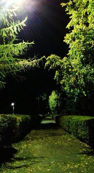 Pskov паркпобеды вечерняяпрогулка осень Ночь Природа деревья вечернийпейзаж