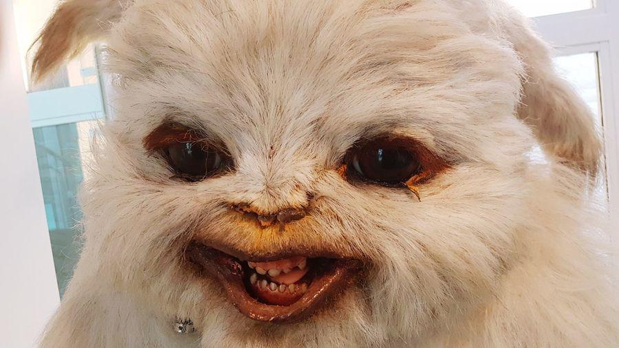 Don't ask Friend Or Foe Gaming Fantasy Mammal Close-up Pets