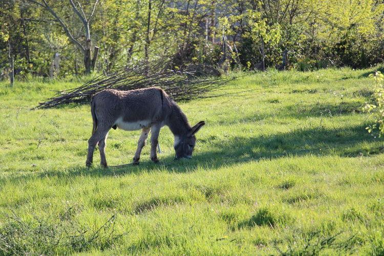 Mammal Outdoors