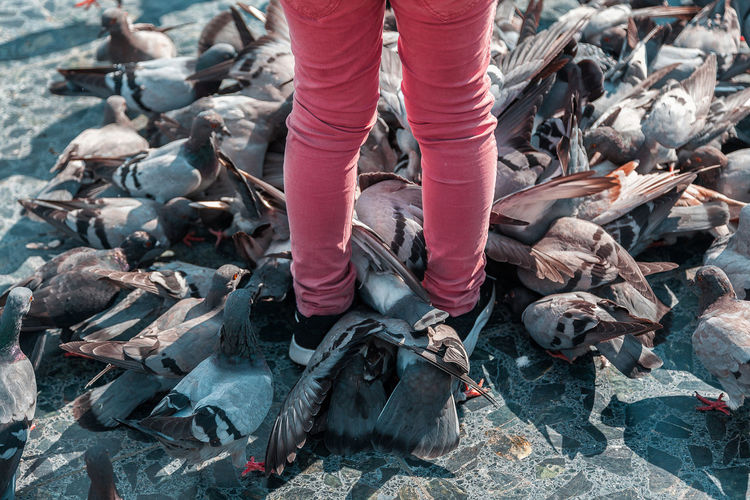 a detail close up of a child feeding a group of pigeons on the square Body Part Clothing Day Focus On Foreground High Angle View Human Body Part Human Foot Human Leg Industry Jeans Land Leaves Lifestyles Low Section Nature One Person Outdoors Real People Shoe Sock Standing