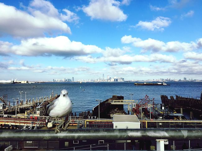 Bird Sky Sea Water Cloud - Sky Animals In The Wild Animal Themes Day Nature Scenics Seagull Outdoors Beauty In Nature Horizon Over Water Animal Wildlife Nautical Vessel No People Perching Architecture Newyorkcity New York Staten Island