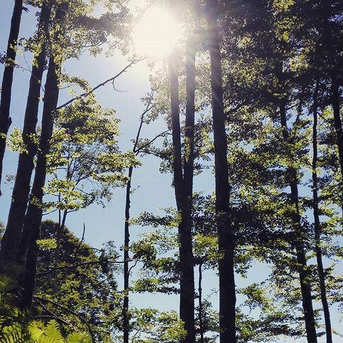 Wald Nature Woods Germany Beautiful Natur Naturelover Earthexperience Allgäu Oberstdorf Bayern Natureaddict Hike Wanderful Landscape Naturephotography Outdoorlife Mushroom Wanderlust Rlp Sommer Mycology Shrooms See Color_me_fungi forest pfälzerwald deutschland natuur wandern Im Wald :-)